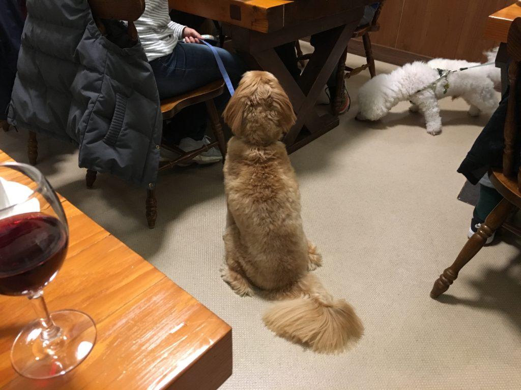 一緒に食事する犬たち