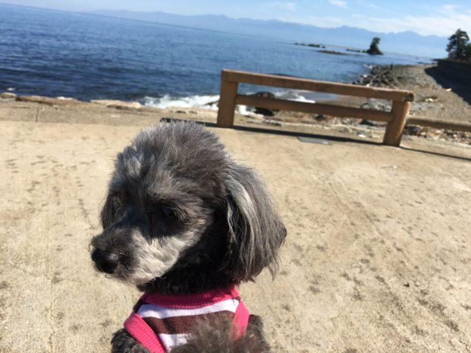 雨晴らし海岸にて黄昏れる犬