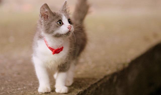 ネコがワンコのようにちぎれるように激しくしっぽを振っているのは実は嫌がっていることが多い。パタパタと激しくしっぽを振っているときは不機嫌なときなので、放って  ...
